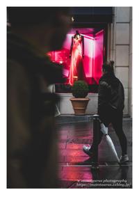 魅惑 - ♉ mototaurus photography