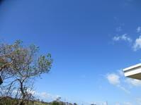 20・21日うるま祭り、天気良し。ブラウス仕上げた。 - 沖縄山城紅茶 茶摘み日記