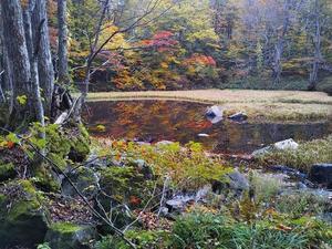 スズ沼 穏やかな水面 - 船形山からブナの便り(ブログ版)