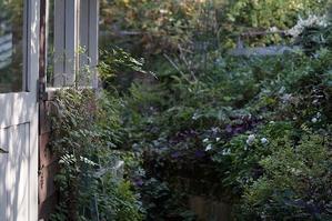 ジャケット縫いました。 - Mimosa Garden*Diary