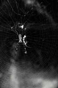 Spider - 夢幻泡影