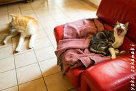 平和すぎる - ノルマン犬猫日記