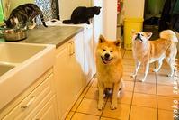 久しぶりの全員集合 - ノルマン犬猫日記
