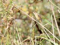 超速報 - ゆるゆる野鳥観察日記