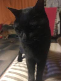 黒猫。 - 小樽BOTAマスの今夜もWHISKY