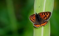 秋晴れ - 紀州里山の蝶たち