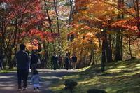 夕張・滝ノ上公園ほかの紅葉 - 今日の鳥さんⅡ