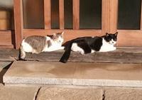 猫筥2つ - スペース356