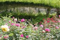 秋薔薇が咲くあしかがフラワーパークへ Ⅱ - 季節の風を追いかけて