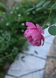 爽やかな朝庭の様子 - miyorinの秘密のお庭