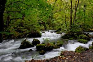 奥入瀬渓流と谷地温泉でイワナランチ! - うひひなまいにち