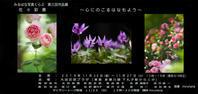 はじまります*みるはな写真くらぶ第3回作品展 - MIRU'S PHOTO