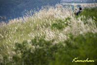 秋の若草山 - カンちゃんの写真いろいろ