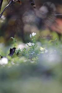 まゝに/10月の散策;智光山公園 - Maruの/ まゝに