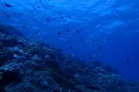 18.10.21パトロールはつづく - 沖縄本島 島んちゅガイドの『ダイビング日誌』