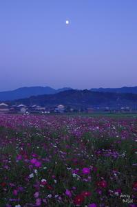 橿原市藤原宮夕景:05 - ぶらり記録 2:奈良・大阪・・・