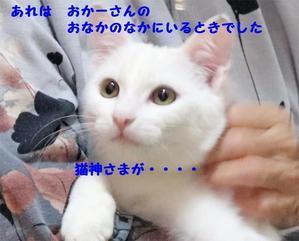 あの時・・ - 八幡地域猫を考える会