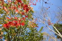 秋の風物詩 - へたぴ~光画館