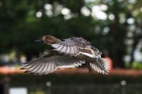 野鳥は冬鳥の季節になりました - スポック艦長のPhoto Diary