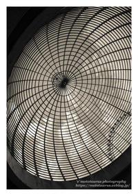 弧を描く - ♉ mototaurus photography