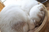 Happy Caturday -sound asleep- #13 - jinsnap_2(weblog on a snap shot)
