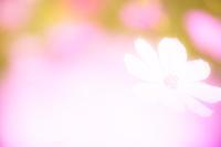 花言葉は「少女の純真」 - 感動模写Ⅱ