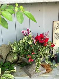 11月ガーデン&クラフツ寄せ植え教室はchristmas先取り♪ - 小さな庭 2