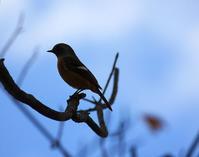 今日の鳥さん181020 - 万願寺通信