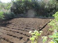 今日も種まき…そして野菜の成長 - 畑へ行こう♪