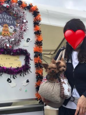 わんわんカーニバル タイムレース編 - わんころ日誌
