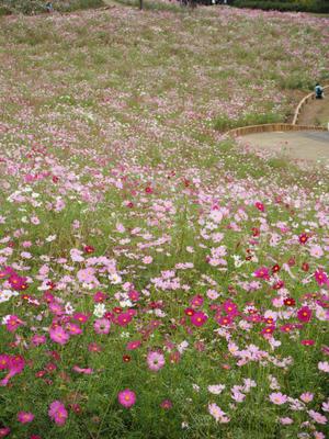 11月レッスンスケジュール - 「花」と「自分」を楽しむ花教室*  fleur Nature-フルール ナチュール-
