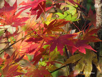 秋色 - Photo Album
