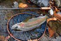 Eagle Eye fisherman - traveler of the mountain stream 2