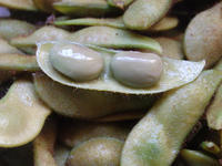 『黒枝豆』感想 - いつでも、ひなたぼっこ