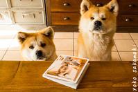 写真集になりました - ノルマン犬猫日記