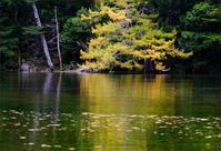 秋の上高地#4 - 長い木の橋