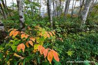 白池界隈の紅葉 - Digital Photo Diary