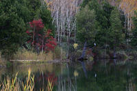 志賀高原の紅葉木戸池にて - 野沢温泉とその周辺いろいろ