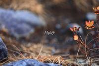 記憶と記録 - Aruku