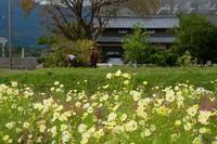 農作業 - Ryu Aida's Photo