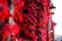 10月20日今日の写真 - ainosatoブログ02