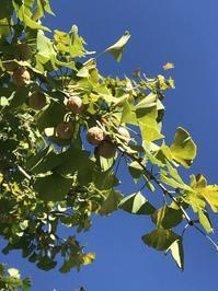 背中を押された秋の収穫 - 幾星霜