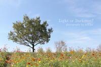 秋桜 - Light or Darkness?