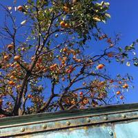 秋の空 - ぶらり配達紀行 ー貸し布団配達ブログー