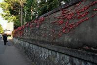 蔦紅葉 - 写心食堂