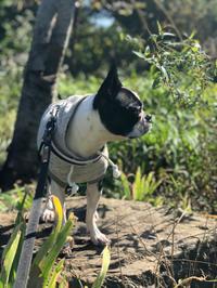 日中の散歩、サイコー - ジルさん