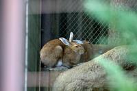 トウホクノウサギ - 動物園へ行こう