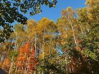 黄色い秋に - 北緯44度の雑記帳