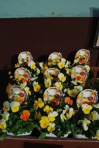 寒さにも負けない花苗入荷しました - 花と暮らす店 木花 Mocca