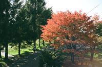 紅葉と紅葉を撮る人と原稿書きの軌道復帰 - 照片画廊